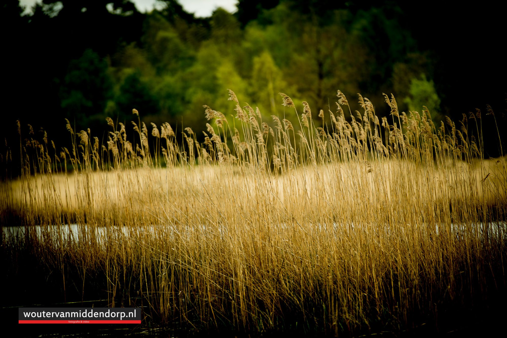 natuurfotografie-103