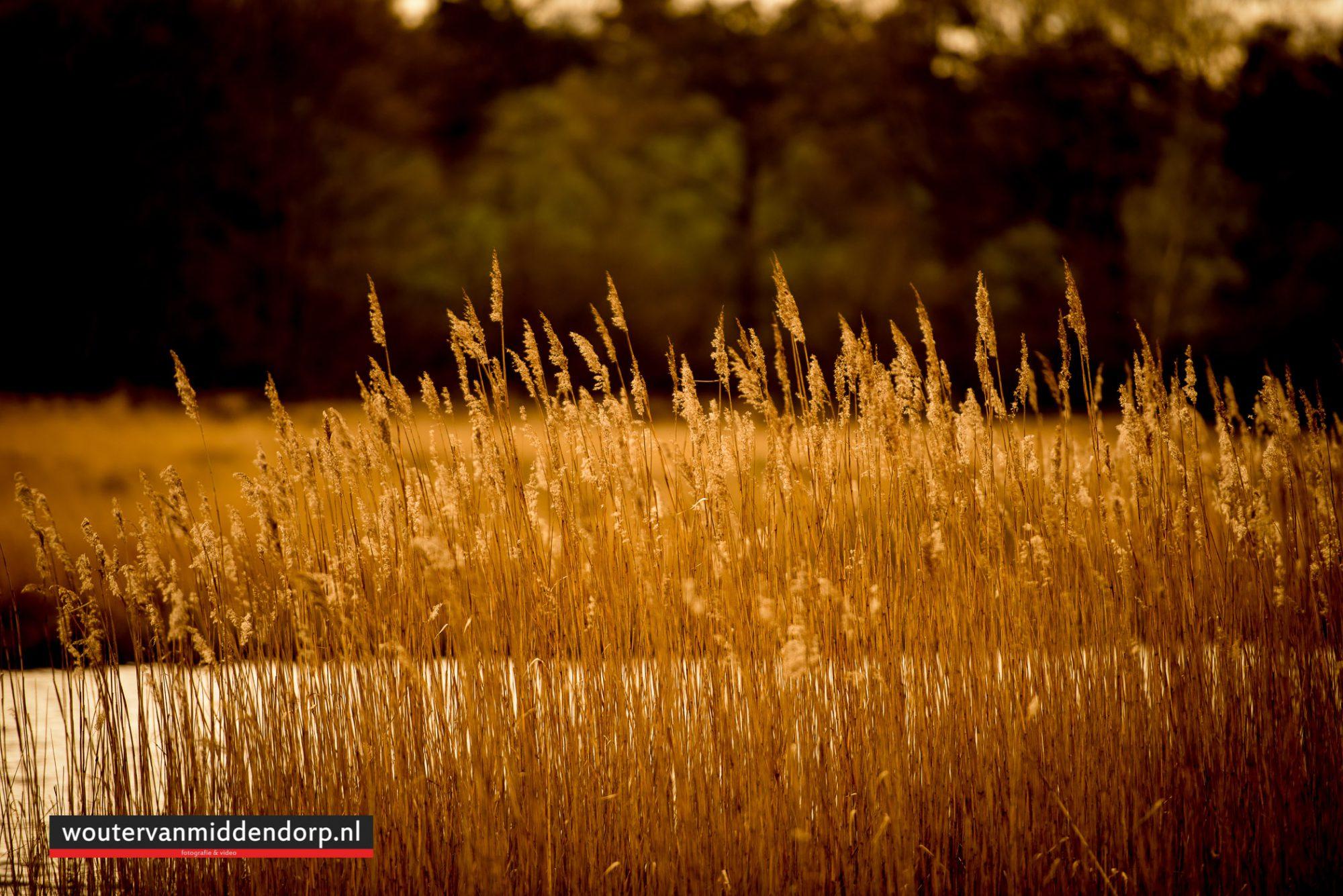 natuurfotografie-104