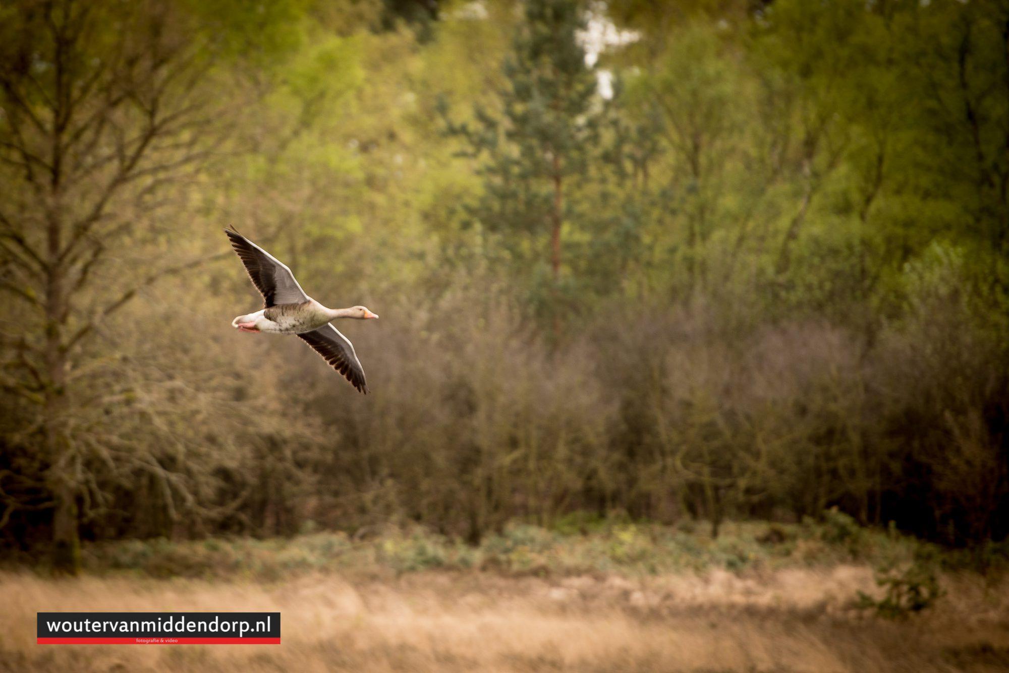 natuurfotografie-107