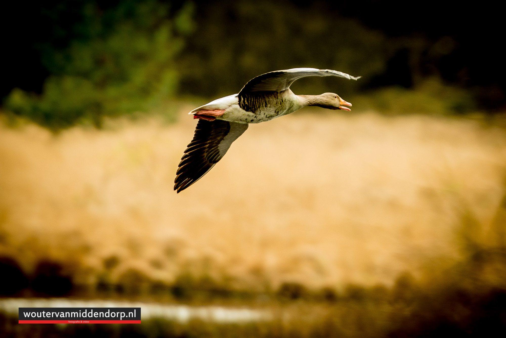 natuurfotografie-108