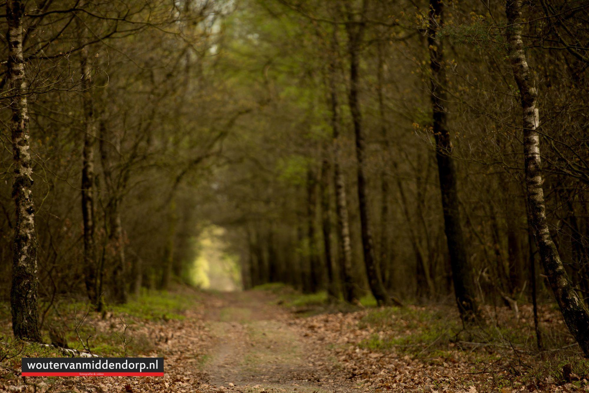 natuurfotografie-112