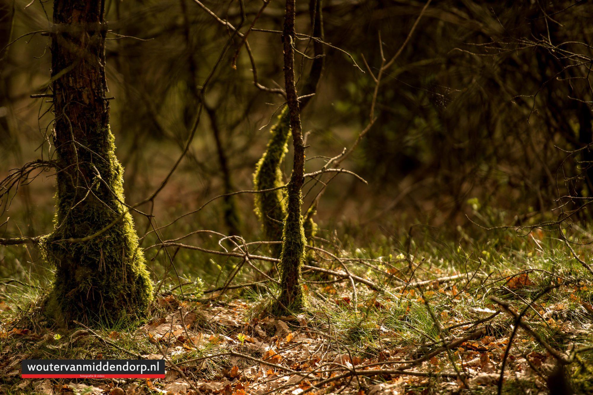 natuurfotografie-117
