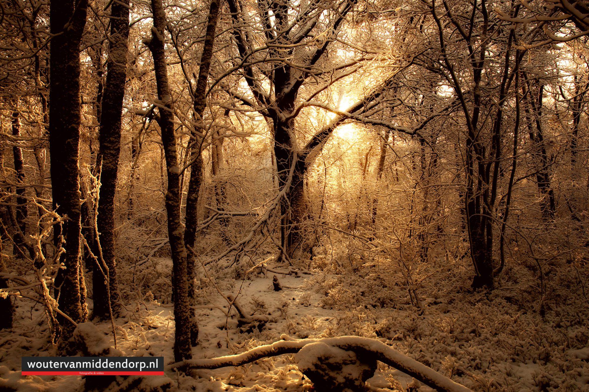 natuurfotografie-12