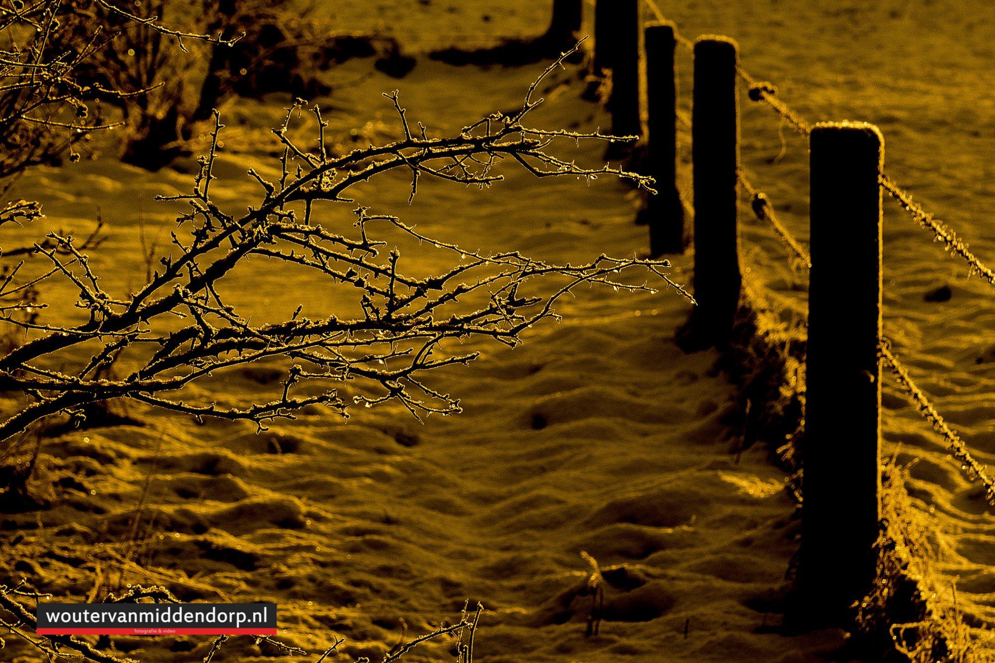 natuurfotografie-124