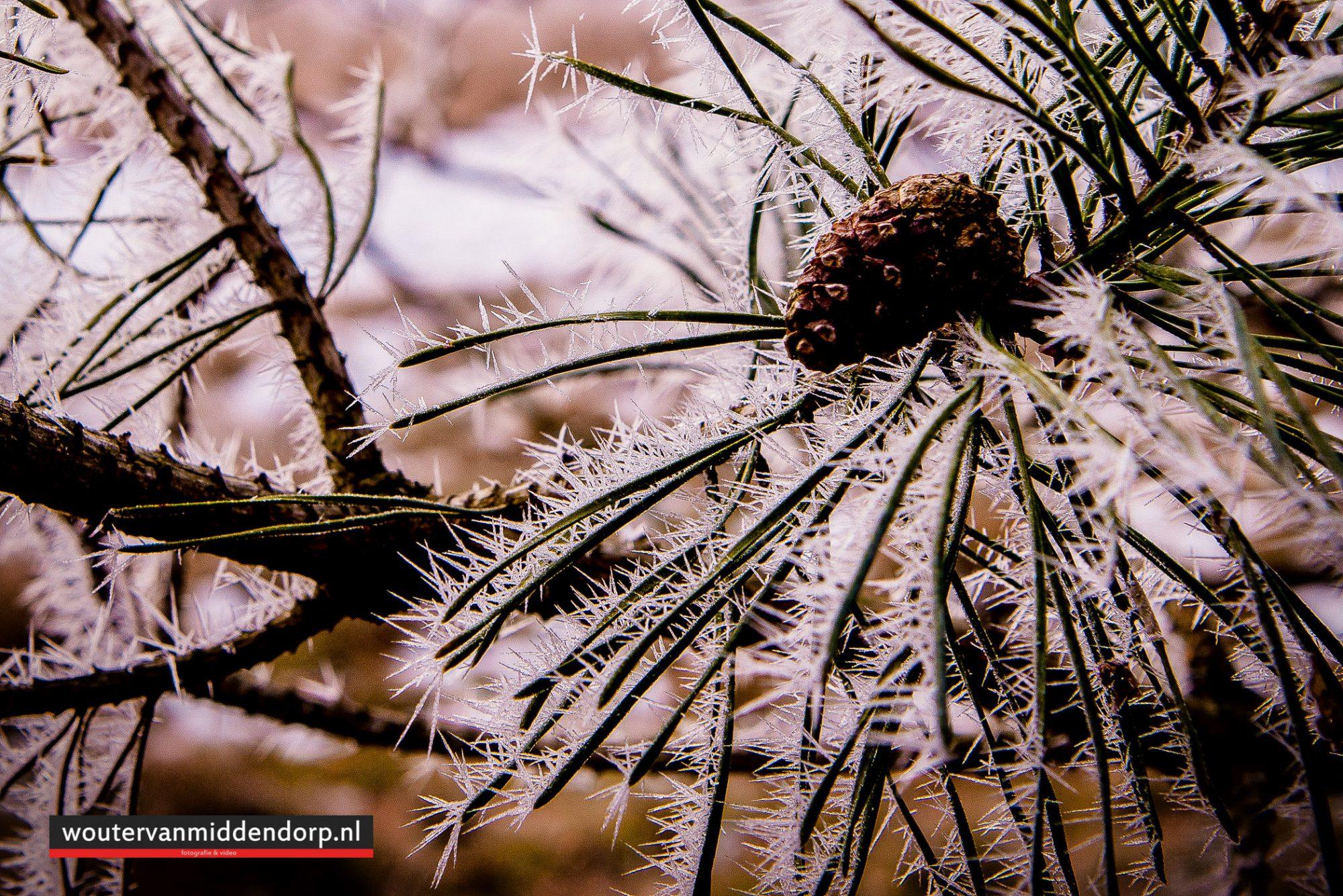 natuurfotografie-126