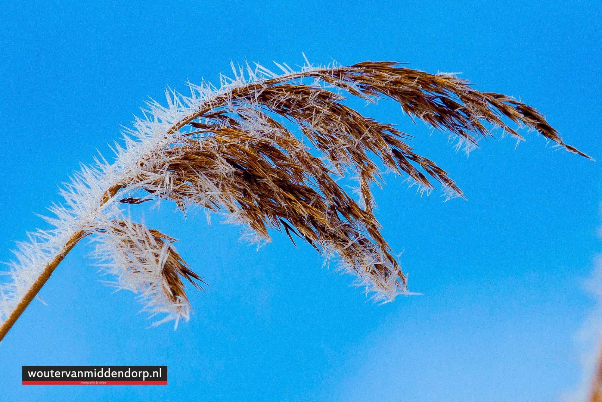 natuurfotografie-131