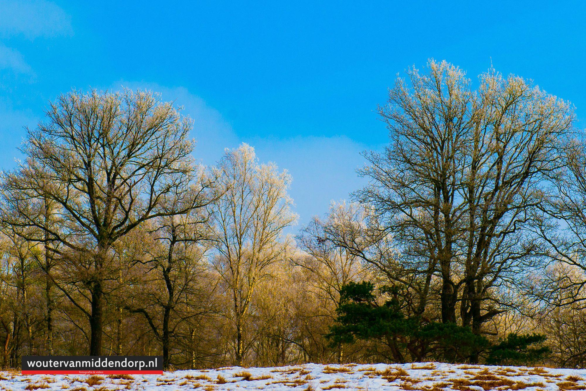 natuurfotografie-133