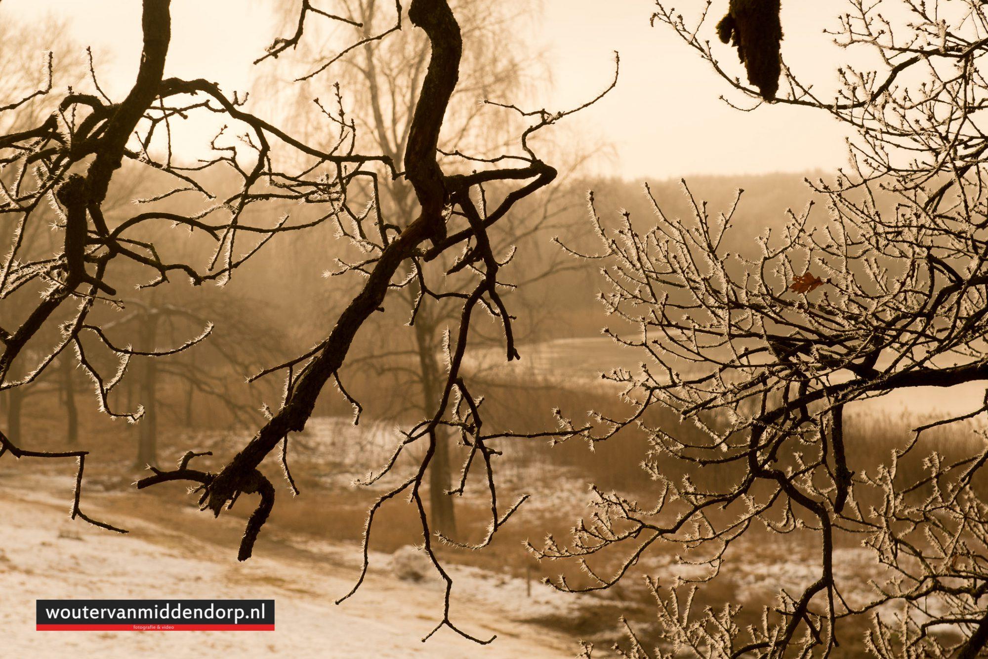 natuurfotografie-140