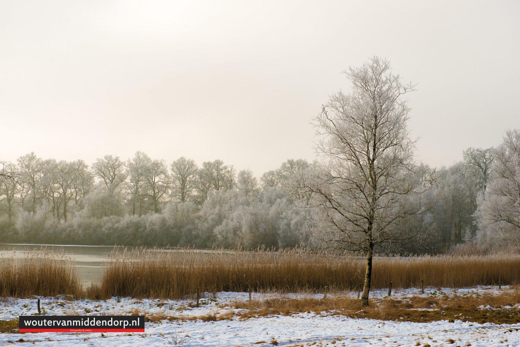 natuurfotografie-143