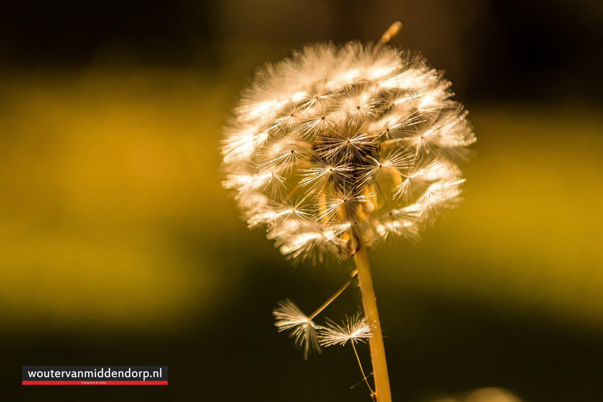 natuurfotografie-149