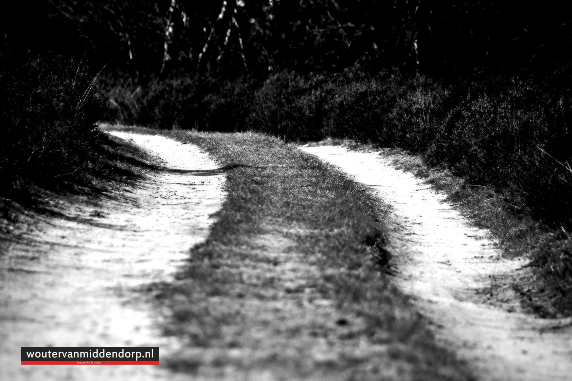 natuurfotografie-24