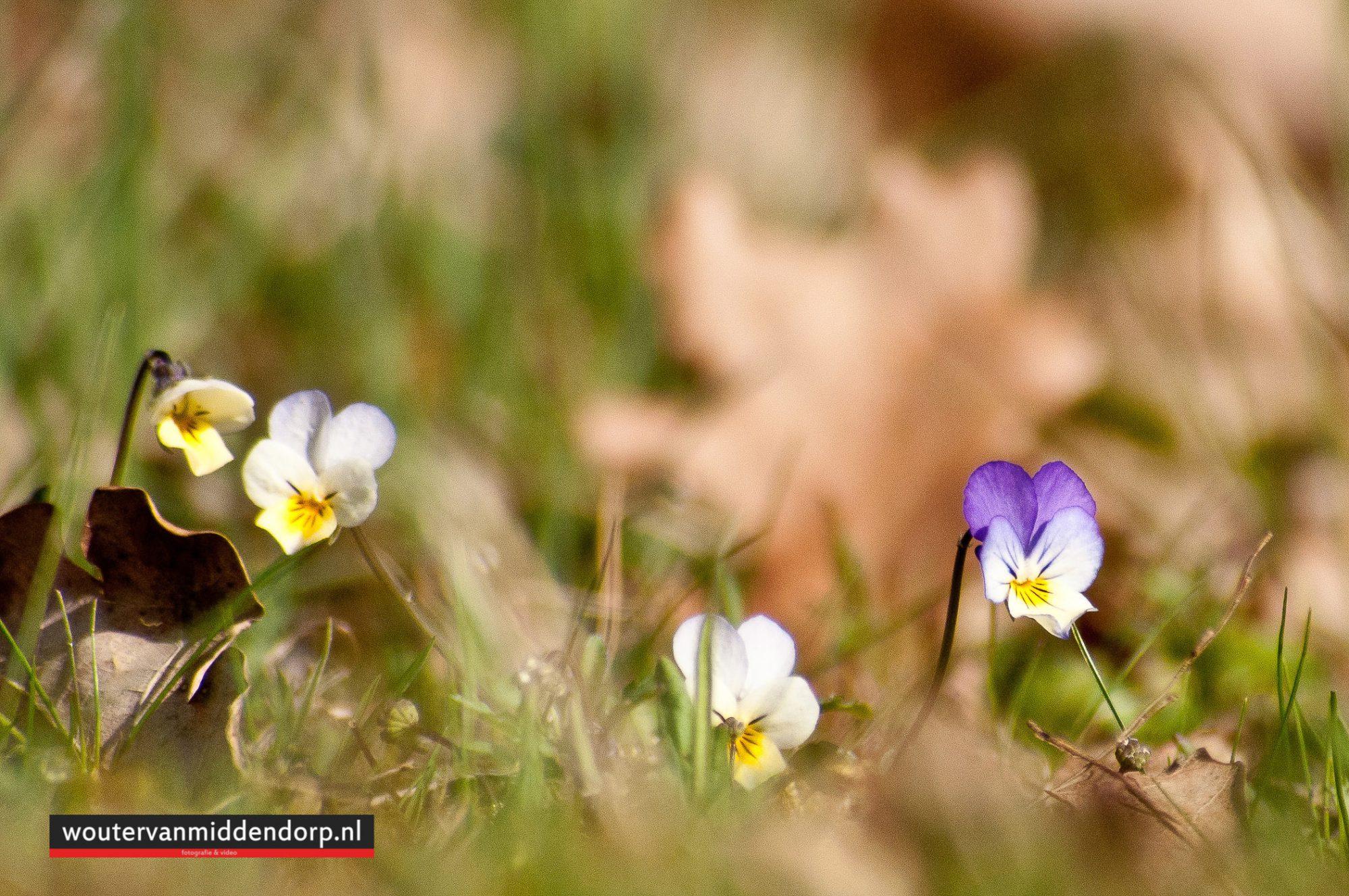 natuurfotografie-25