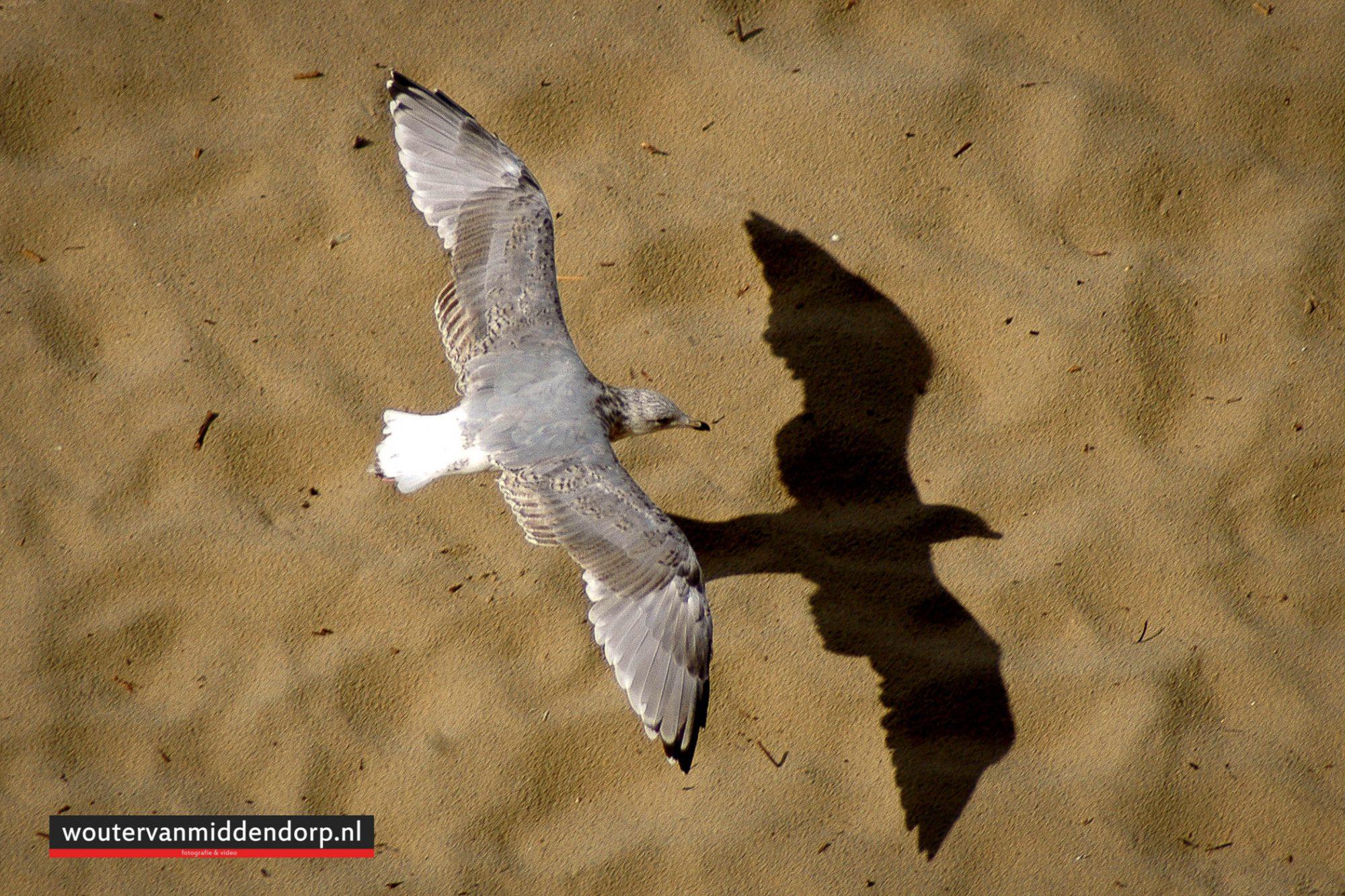 natuurfotografie-47
