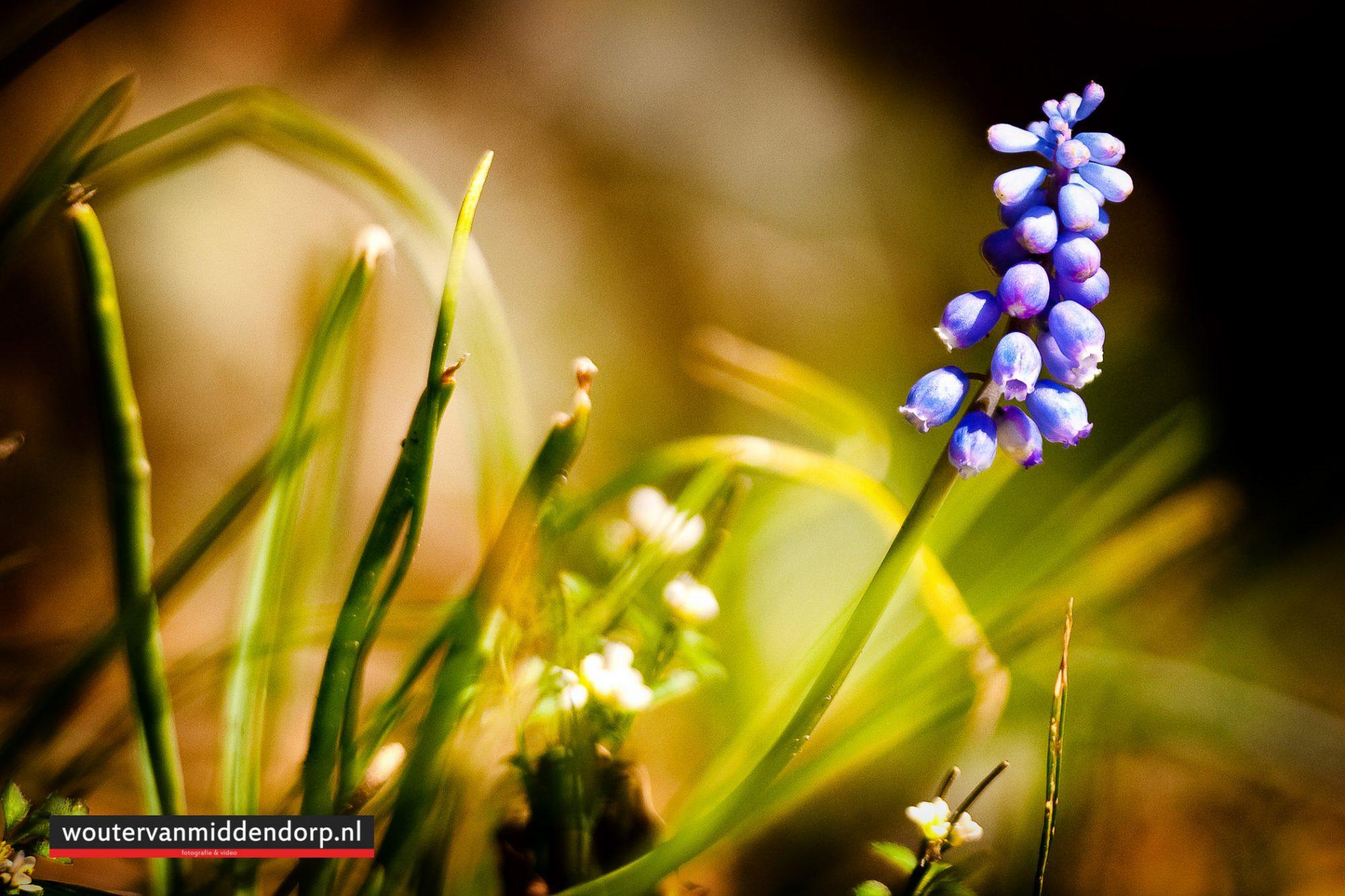 natuurfotografie-73