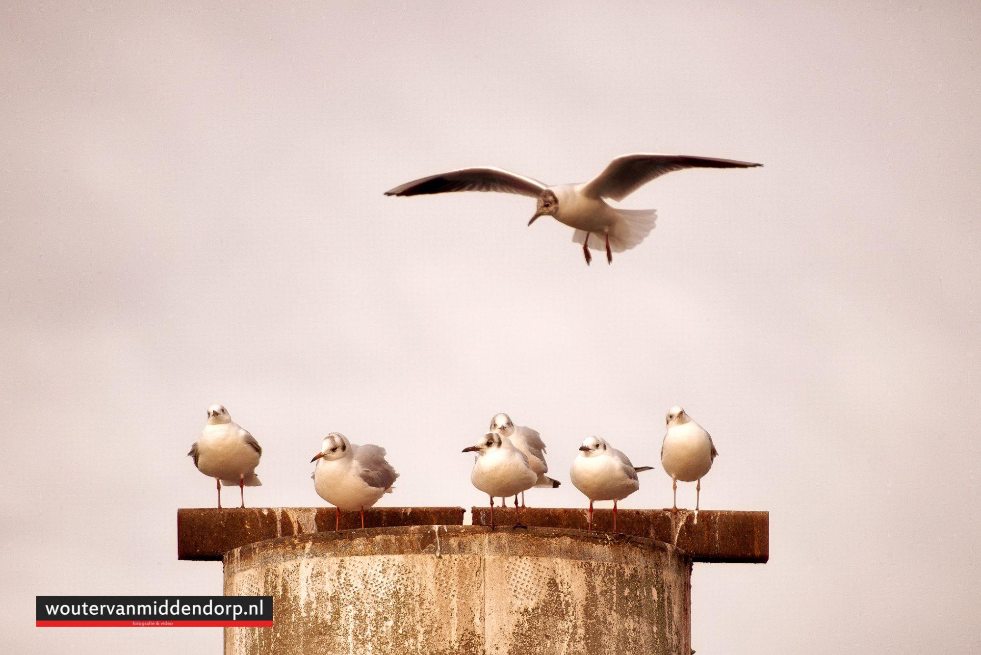 natuurfotografie-74