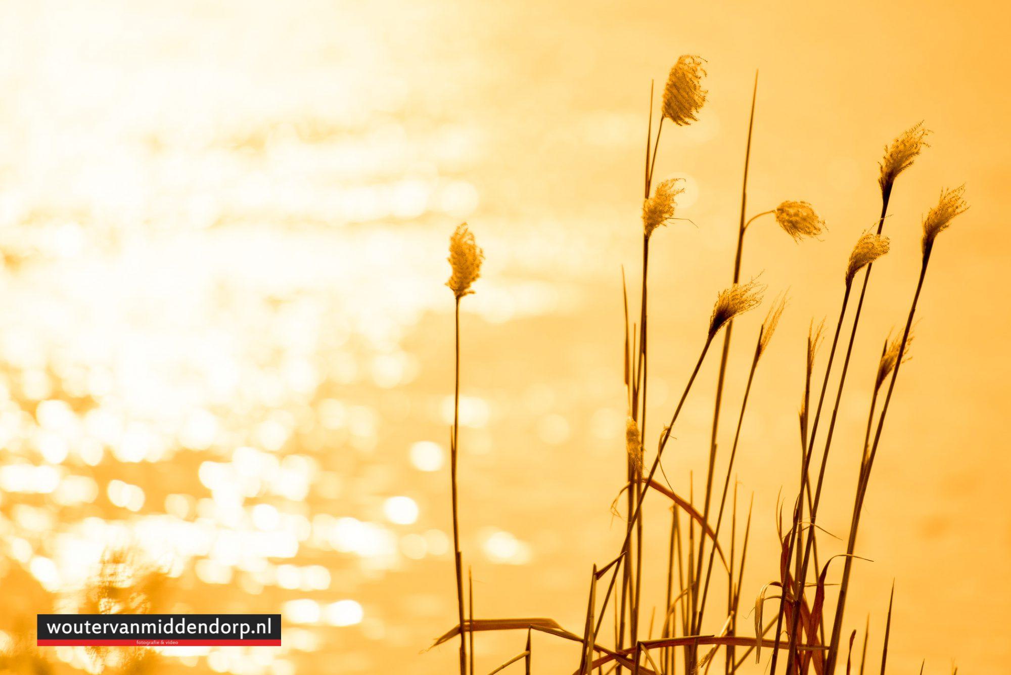 natuurfotografie-76