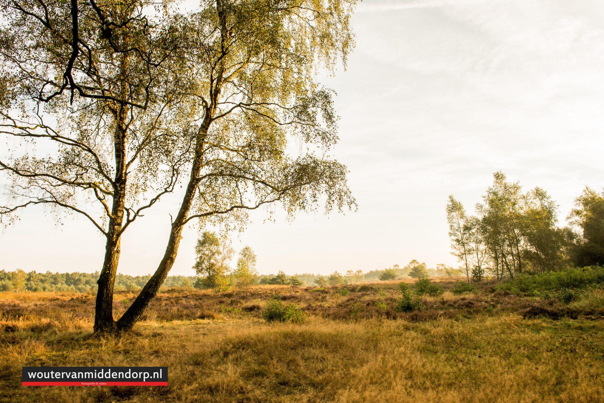 natuurfotografie-77