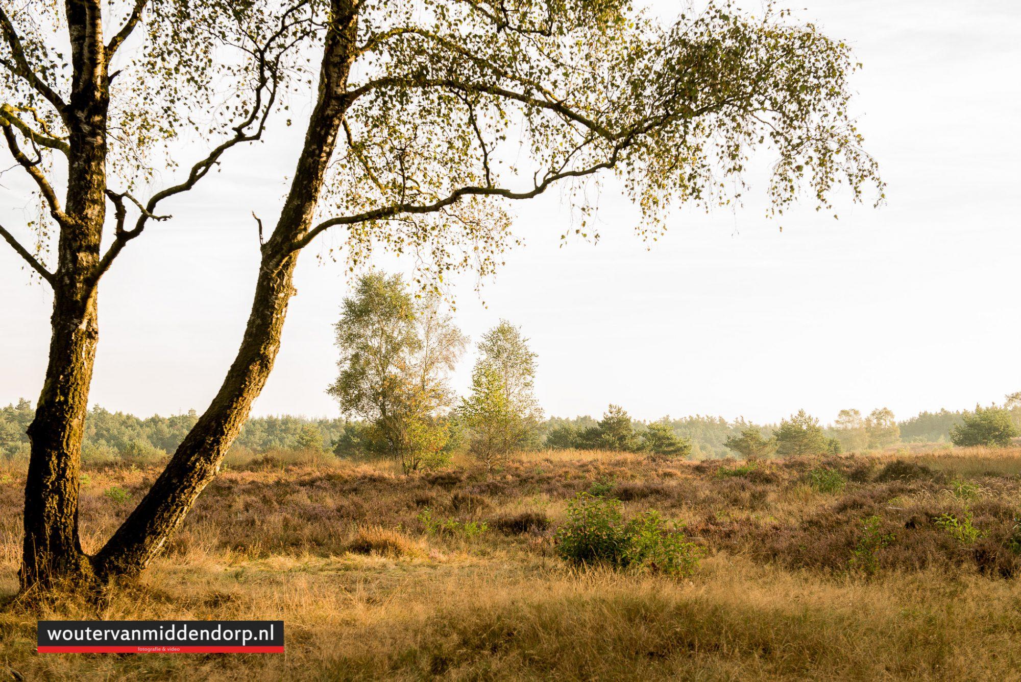natuurfotografie-78