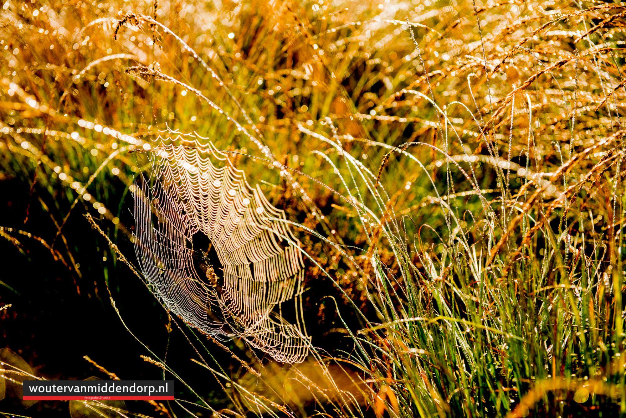 natuurfotografie-82