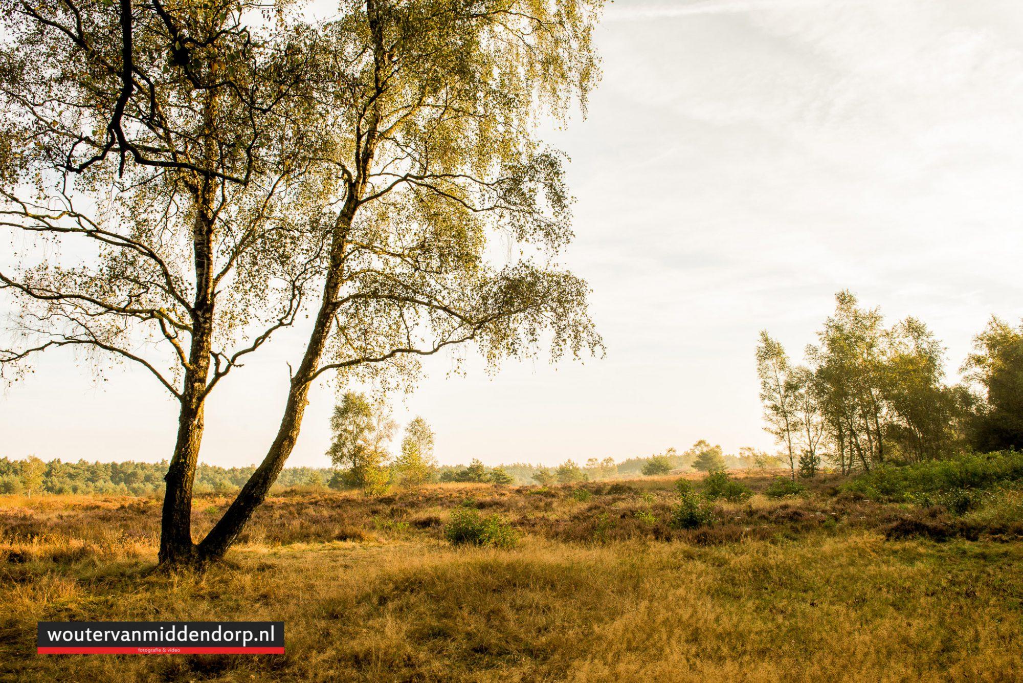 natuurfotografie-86