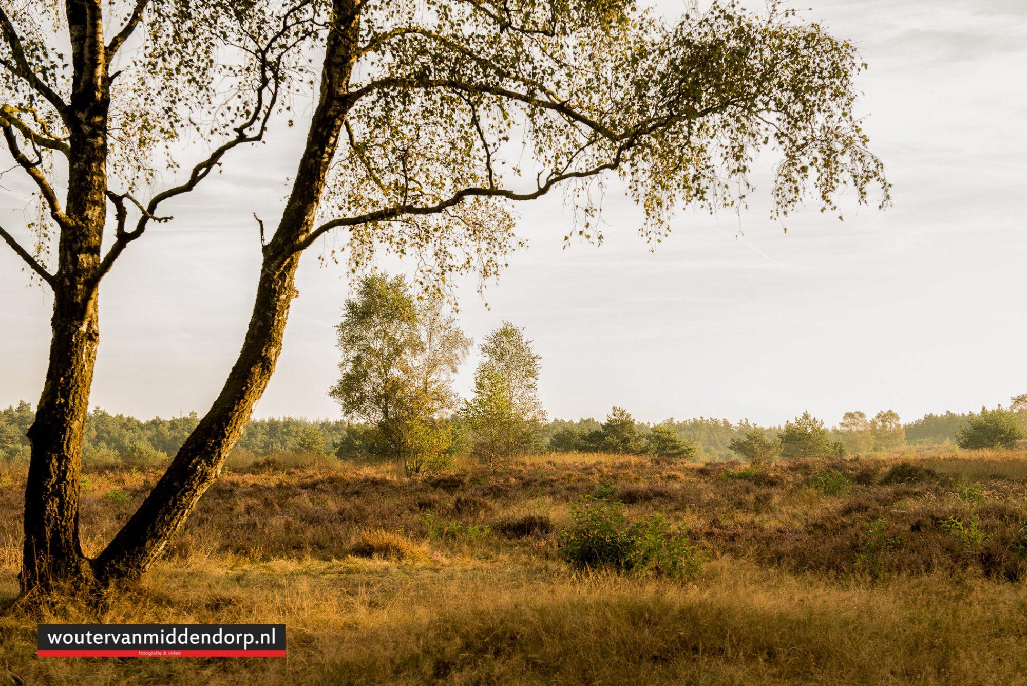 natuurfotografie-87