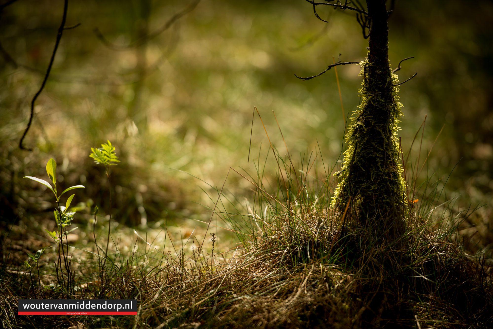 natuurfotografie-98